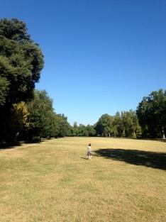 Fields in the Cascine Park